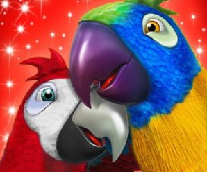 Talking Parrot Couple Free Apk For Android